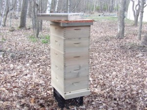 Build or Buy Our Beehive -