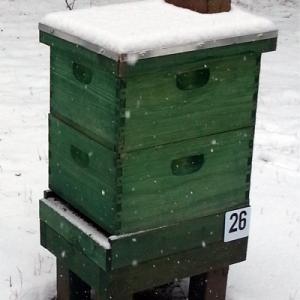 Winter Hive