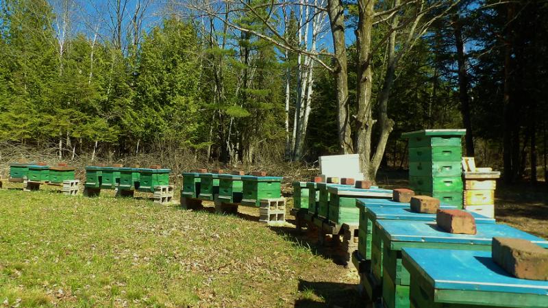 Job Opening – Assistant Beekeeper